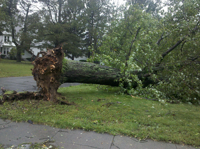 An uprooted tree in front of the Church of Christ Congregational, UCC, Millis